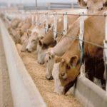 Global Animal Feed Market Size