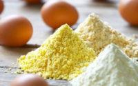 Global Egg Powder Market
