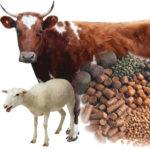 Animal Feed Dietary Fiber Market