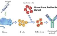 India Monoclonal Antibodies Market