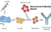 India Monoclonal Antibodies Market