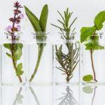Botanical Extracts Market