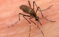 India Mosquito Repellent Market
