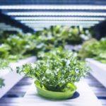 Agrochemical Intermediates Market