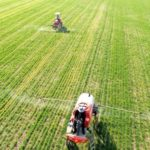 Global Genetically Modified Crops Market
