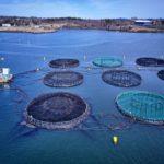 Saudi Arabia Aquaculture Market